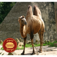 Árpád Burger | Giant Camel Burger | Menu24.hu